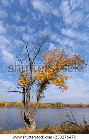 autumn landscape golden autumn in the oak grove near the river on a sunny day - stock photo