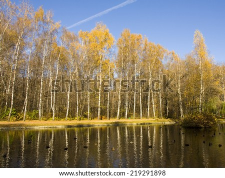 Autumn landscape, golden birch forest on bank of lake with reflection and little island with birch trees, recorded on Putyaevskiye lakes in Sokolniki park in Moscow. - stock photo