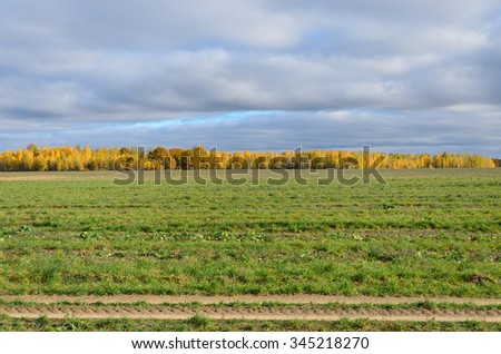 Autumn landscape, green field and forest yellowing, soft focus - stock photo