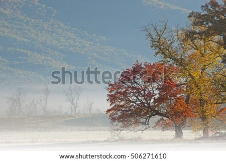 Autumn landscape in fog, Cades Cove, Great Smoky Mountains National Park, Tennessee, USA