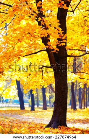 Autumn landscape in park with yellow leaves - stock photo