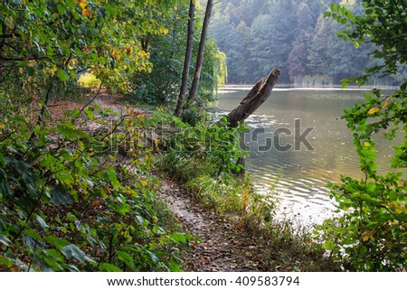 Autumn landscape in the forest - stock photo