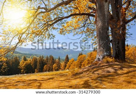 Autumn landscape in the national park Sumava - Czech Republic - stock photo