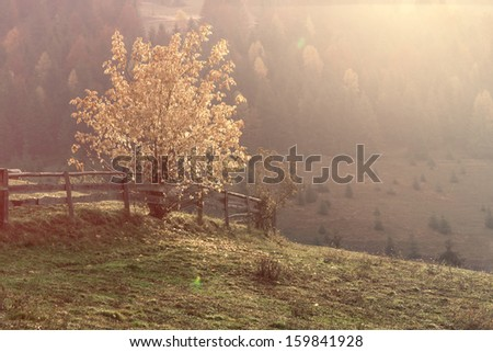 Autumn landscape in the sunshine - Transylvania mountains
