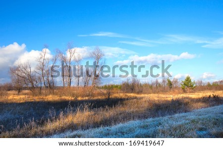 autumn landscape Indian summer in the oak grove blue sky and white clouds on a sunny day
