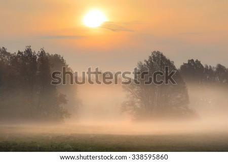 autumn landscape misty dawn in a glade oak grove - stock photo