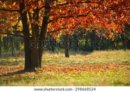 autumn landscape, nature - stock photo