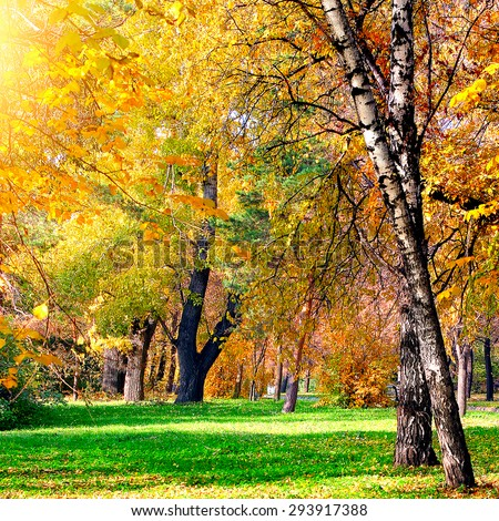 Autumn Landscape of the City Park with different Trees and Bushes