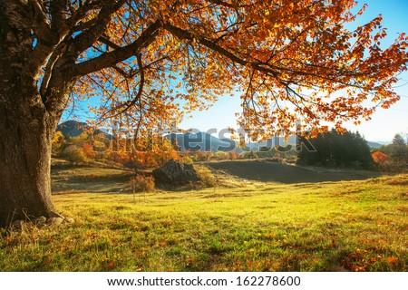 Autumn landscape, orange trre - stock photo