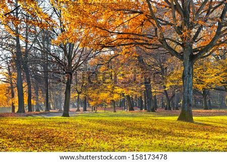 Autumn Landscape. Park in Autumn. Landscape with the autumn forest. Lonely beautiful autumn tree. - stock photo