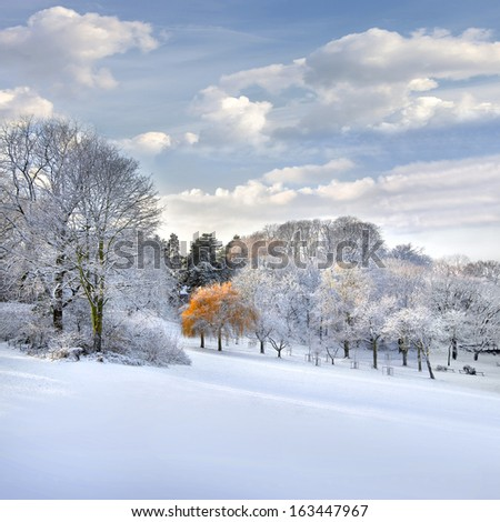 Autumn Landscape. Park in Autumn. The first snow.