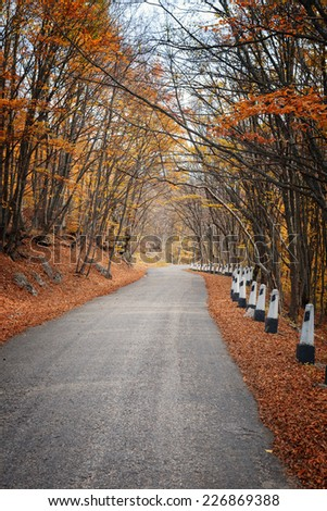 Autumn landscape. Road in the autumn forest - stock photo
