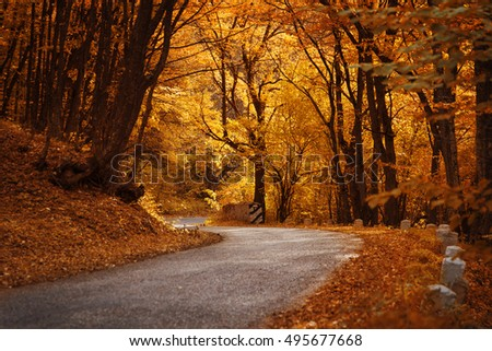 Autumn landscape. Road in the autumn forest