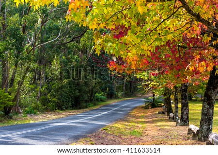 Autumn landscape road with colorful trees on sunny day. Bright and vivid autumn foliage with blurred country road on the background. Selective focus on leaves. Mount Wilson, Australia - stock photo
