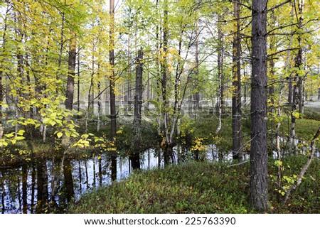 autumn landscape Russian forest tundra - stock photo