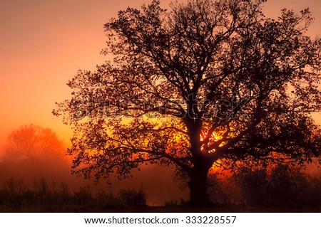 autumn landscape, trees in the mist at dawn.