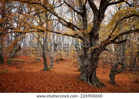 Autumn landscape. Trees with red leaves in autumn forest - stock photo