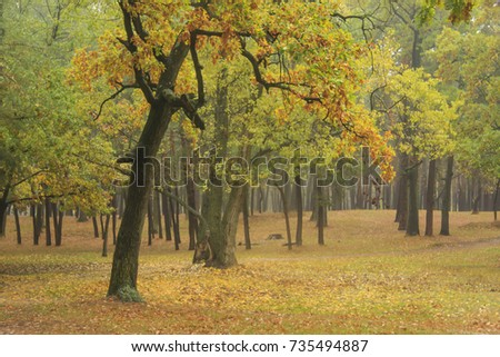 autumn landscape - wet park