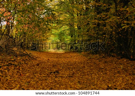Autumn landscape with a beautiful road with colored trees. - stock photo