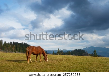Autumn landscape with a horse in the pasture. Sunny day in the mountains - stock photo