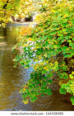 autumn landscape with a river and trees