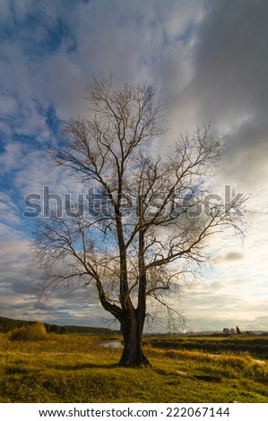 Autumn landscape with a tree on a decline