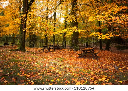 Autumn landscape with beautiful colored trees and benches - stock photo
