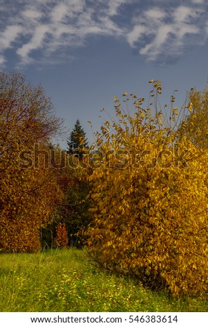 autumn landscape with blue sky green grass