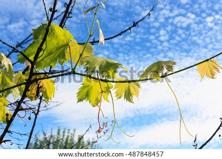 Autumn landscape with branches on sky background