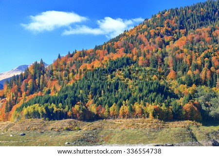 Autumn landscape with colorful mix of vegetation on the mountain side - stock photo