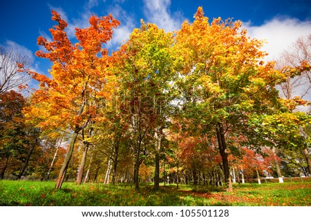 Autumn landscape with colourful maple tree - stock photo