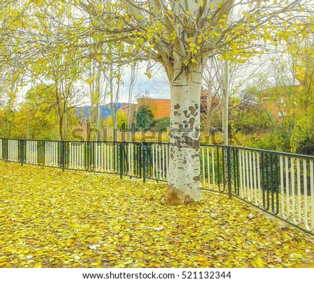 Autumn landscape with fallen leaves