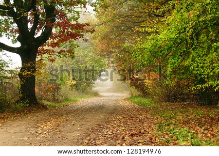 autumn landscape with haze and dirt road, dark tree and colorful foliage