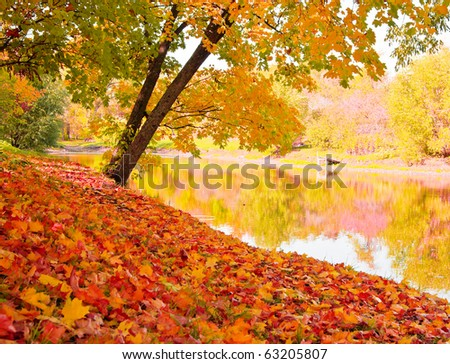 Autumn landscape with maples and water surface - stock photo