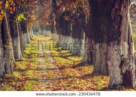 Autumn landscape with sidewalk covered by fallen dry brown leaves in a sunny morning. Shallow depth of field, selective focus. - stock photo