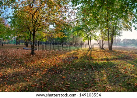 Autumn landscape with wood and sun rays, a carpet of golden leaves - stock photo