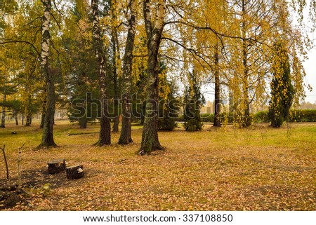 Autumn landscape with yellow trees and red foliage