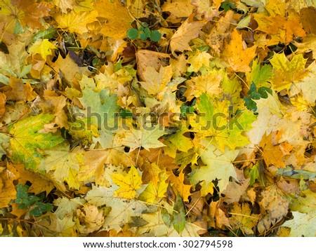 Autumn leaf. - stock photo