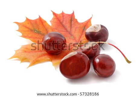 autumn leaf and chestnuts isolated on white background - stock photo