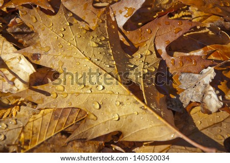 Autumn leaf and water droplets in bright sunshine - stock photo