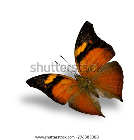 Autumn leaf butterfly, the beautiful flying black and orange butterfly on white background with shadow beneath - stock photo