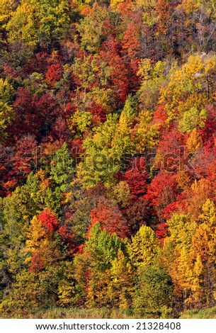 autumn leaf colors - stock photo