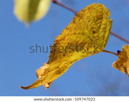 Autumn Leaf Detail with a Blue Sky Background