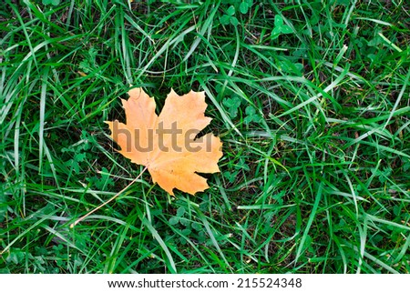 Autumn leaf fallen on green grassland - stock photo