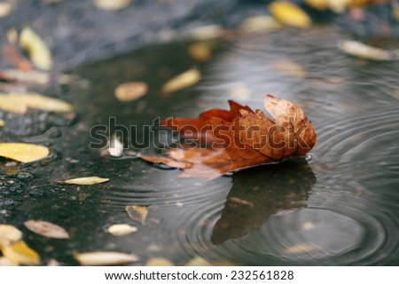 Autumn leaf in puddle  - stock photo