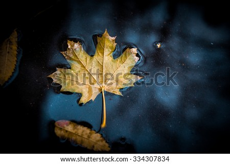 autumn leaf in the puddle under the rain - stock photo