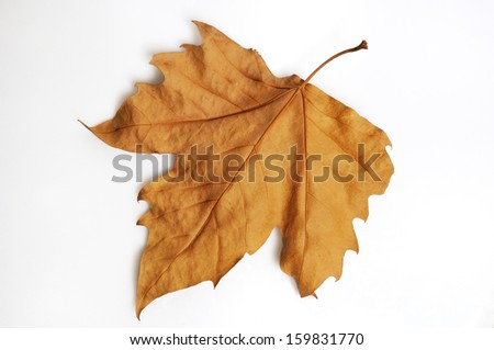 autumn leaf isolated in white background - stock photo
