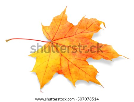 Autumn leaf, isolated on white