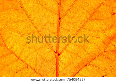 Autumn leaf macro detail