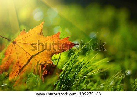 Autumn leaf on green grass, macro closeup.